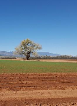 cropped-cottonwoodtree4.jpg